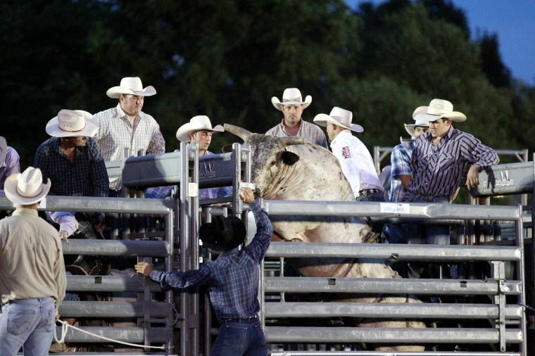 A bull tries to jump the fence. (Jen Rynda/BSMG)