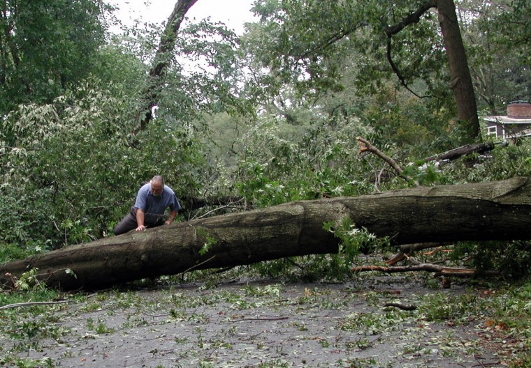 A local resident climbs across a fallen tree 19 September 2003 in suburban Alexandria, Virginia in the early morning hours following the passing of Hurricane Isabel through the region. Isabel's high winds and rain caused extensive flooding, downed trees in Alexandria, and the Washington metropolitan area. (Bob Pearson/Getty Images)