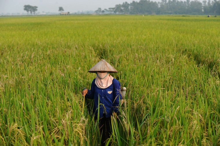A farmer sprays pesticide on a rice field on the outskirts of Hanoi. Vietnam's economic growth picked up slightly in the first nine months of the year, official figures showed on September 25, but experts warned the communist country could still miss its annual target. (Hoag Dinh Nam/Getty Images)