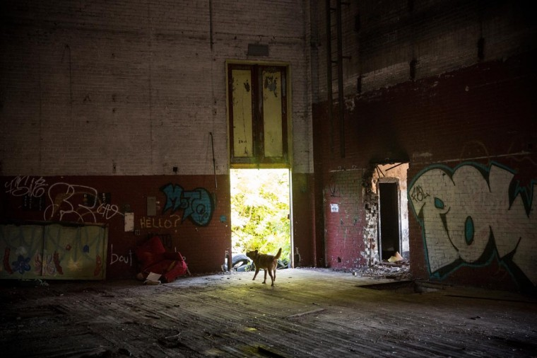A wild dog wanders through Detroit's historic Eastown Theatre are seen on September 4, 2013 in Detroit, Michigan. (Andrew Burton/Getty Images)