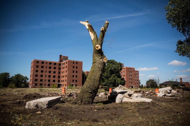 A destroyed tree sits next to the remains of the Fredrick Douglass Housing Projects, which were abandoned in 2008 and are now being demolished, on September 5, 2013 in Detroit, Michigan. (Andrew Burton/Getty Images)