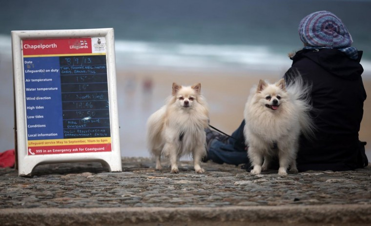 A woman sits with her dogs as she watches the annual World Belly Boarding Championships at Chapel Porth on September 8, 2013 in Cornwall, England. (Matt Cardy/Getty Images)