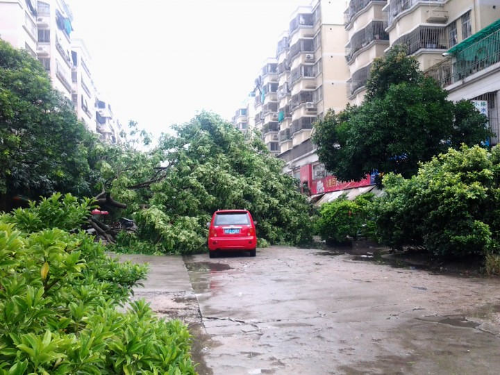 Trees are blown down by strong winds after Typhoon Usagi made landfall in Shantou, China. (Photo by ChinaFotoPress via Getty Images)
