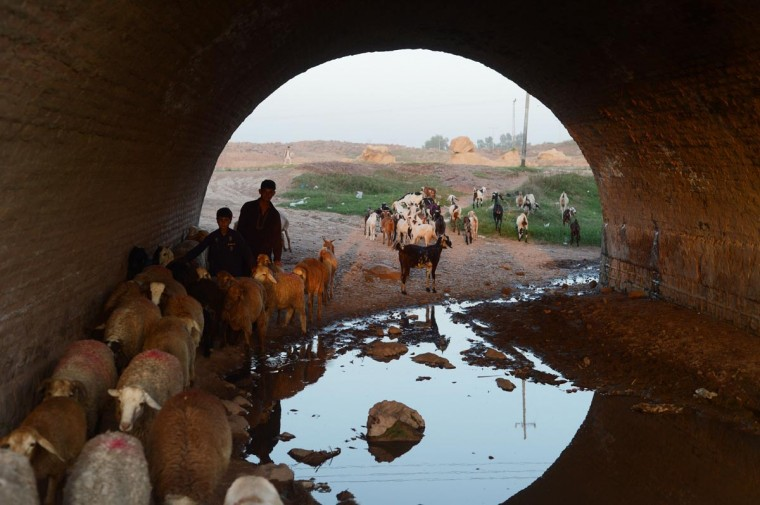 A Pakistani sharped herds sheep through a tunnel on the outskirts of Islamabad on September 20, 2013. Pakistan is in the grip of its worst energy crisis in modern history which causes power outages up to 20 hours in parts of the country and has hammered industrial output. (Farooq Naeem/AFP/Getty Images ORG XMIT: