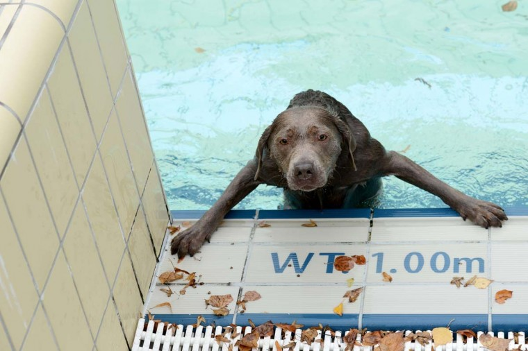 A dog looks out of a public swimming pool in Bamberg, southern Germany on September 21, 2013. The public swimmingpool opened exclusively for animals for a day. (David Ebner/AFP)
