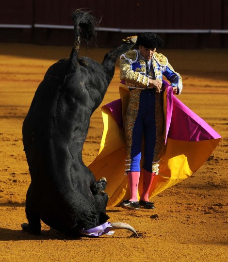 Spanish matador Manuel Jesus 'El Cid' performs a pass on a bull during a bullfight at the Maestranza bullring in Sevilla on September 28, 2013. (Cristina Quicler/AFP)