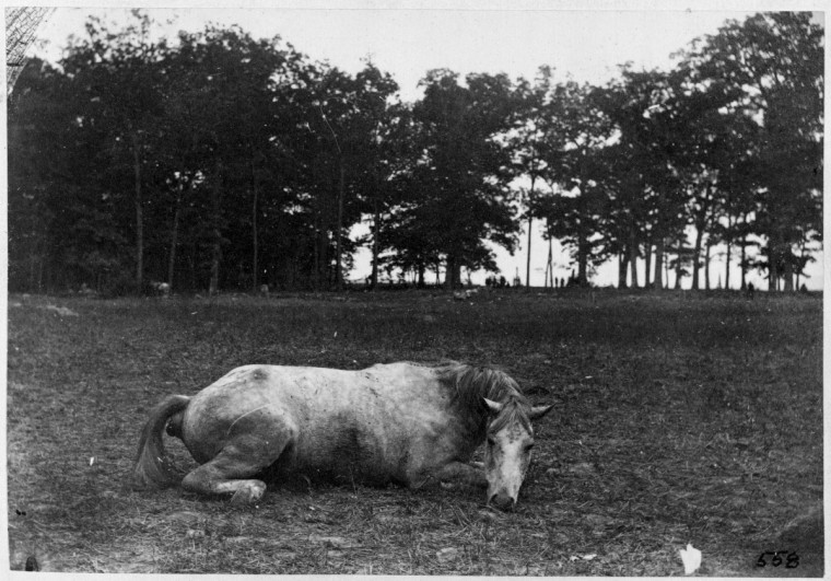 "A photo taken by Alexander Gardner called ""Confederate colonel and horse, both killed at the Battle of Antietam"" (it's known the horse image was taken in the East Woods area but no one is positive yet the exact location) following the battle of Antietam. (Alexander Gardner/Courtesy Library of Congress)"