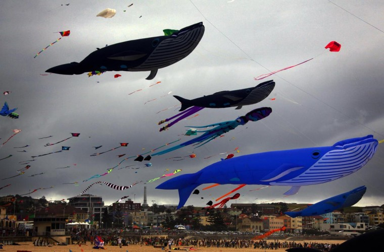 Large whale-shaped kites and others fly above a large crowd gathered for the Festival of the Winds on Sydney's Bondi Beach September 8, 2013. The festival attracts hundreds of local and international kite-makers annually, and is one of the largest kite festivals in the nation, according to organizers. (David Gray/Reuters)