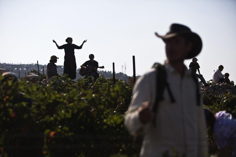 Christian volunteers take part in a grape harvest in the West Bank Jewish settlement of Har Bracha, near Nablus September 3, 2013. Coming from various countries, the volunteers, who belong to a Christian organiation that supports farmers in West Bank Jewish settlements, take part in harvests every year. (Nir Elias/Reuters)
