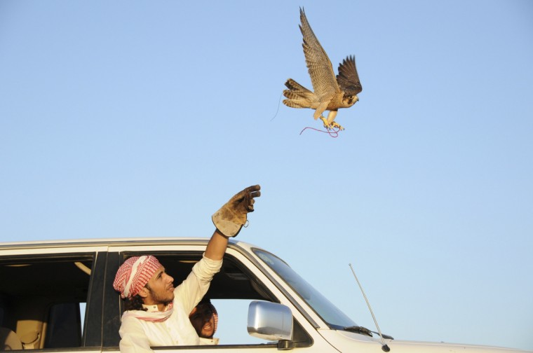 A hunter releases his falcon in a desert area near the Saudi city of Dheba. Falconry is part of Bedouin life in Saudi Arabia where these birds are used for hunting rabbits and other desert animals. It is also one of the pastime sports of the rich in this oil-rich kingdom. (Mohamed Al Hwaity/Reuters)