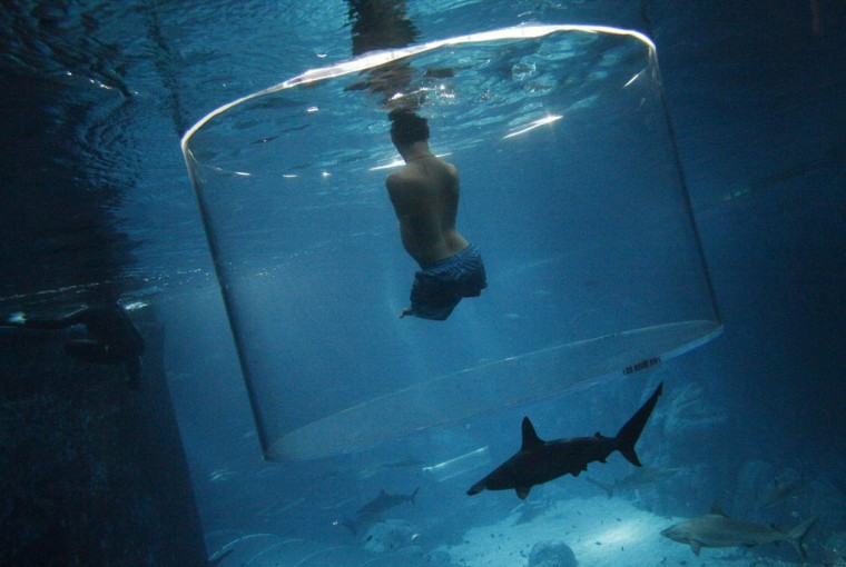 Nick Vujicic, an Australian motivational speaker who was born without limbs, swims with sharks at the Marine Life Park in Singapore September 5, 2013. Vujicic dived with sharks in a customized acrylic enclosure that takes in a 360-degree view of the shark habitat at the aquarium. Vujicic is in Singapore to give a motivational talk to a 5,000 strong audience on Saturday. (Edgar Su/Reuters)