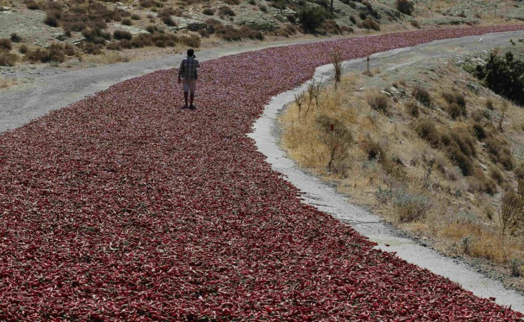 Okkes Sahin (16) walks on hot peppers laid out on a road to dry under the sun in Kilis province. Farmers sell their peppers to factories producing pepper products after drying them under the sun for a week. (Umit Bektas/Reuters)