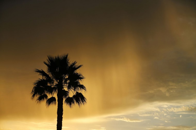 A palm tree is silhouetted as morning sunlight is reflected through rain falling from a passing cloud near Moonlight Beach in Encinitas, California, September 6, 2013. (Mike Blake/Reuters)