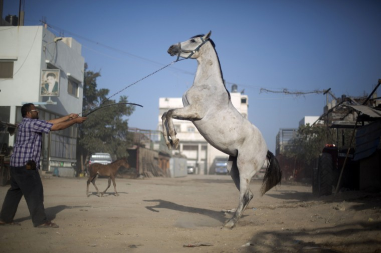 A Palestinian man trains a horse in Gaza City. (Mohammed Abed/Getty Images)