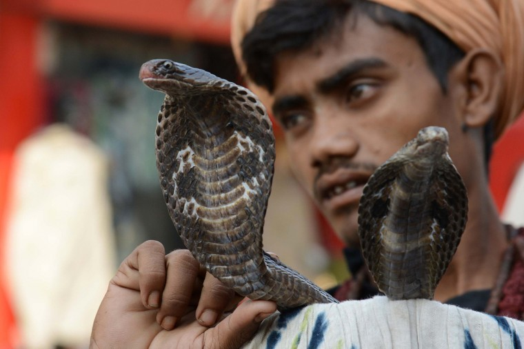 An Indian snake charmer poses with his cobras as he waits for alms from devotees outside a temple in Amritsarahead of the Hindu festival of Diwali. Diwali, celebrated this year on November 3, marks the victory of good over evil and commemorates the time when Hindu God Lord Rama achieved victory over Ravana and returned to his Kingdom Ayodhya after 14 years of exile. (Narinder Nanu/Getty Images)