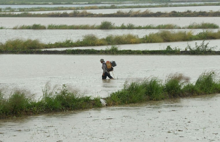 A farmer walks through a flooded rice field in Ayutthaya province, north of Bangkok, Thailand. (PORNCHAI KITTIWONGSAKUL / AFP/Getty Images)