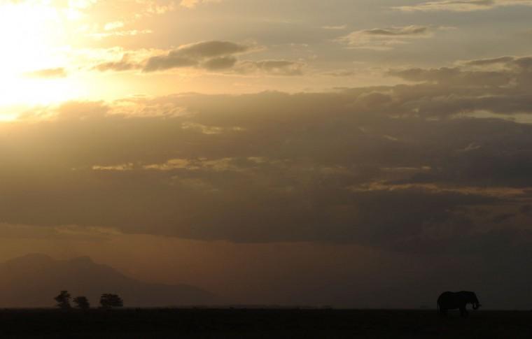 An elephant grazes at sunset at Amboseli National Park, approximately 220 kilometers southeast of Nairobi. (TONY KARUMBA / AFP/Getty Images)