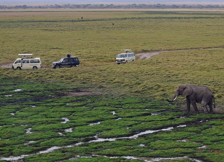 An elephant grazes in a marsh at Amboseli National Park, approximately 220 kilometers southeast of Nairobi. (TONY KARUMBA / AFP/Getty Images)