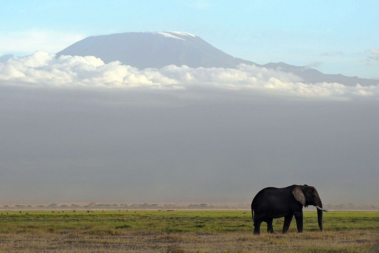 An elephant grazes at Amboseli National Park, approximately 220 kilometers southeast of Nairobi. (TONY KARUMBA / AFP/Getty Images)