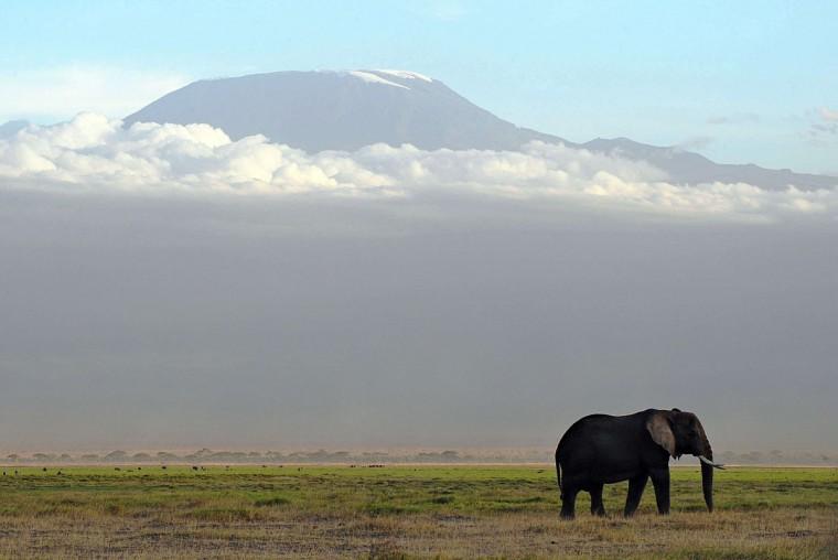 An elephant grazes at Amboseli National Park, approximately 220 kilometers southeast of Nairobi. (TONY KARUMBA / AFP/Getty Images)