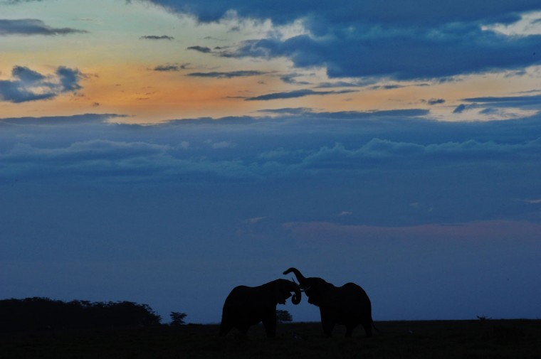 Elephants are seen at sunset at Amboseli National Park, approximately 220 kilometers southeast of Nairobi. (TONY KARUMBA / AFP/Getty Images)