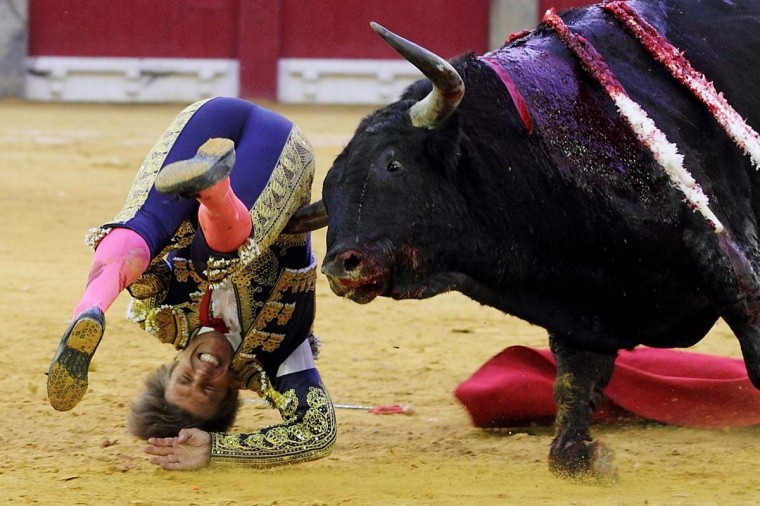 Spanish matador El Cordobes is gored by a bull during a bullfight at La Misericordia bullring during El Pilar Feria in Zaragoza on October 12, 2013. (Alberto Simon/AFP)