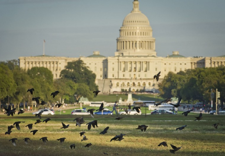 A flock of birds takes flight on the National Mall in front of the US Capitol building. (MLADEN ANTONOV / AFP/Getty Images)