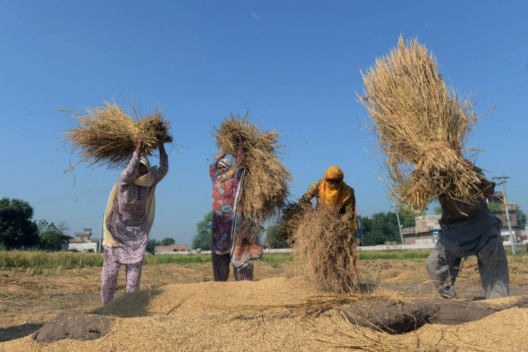 Pakistani women work in an agricultural field in Lahore on Oct. 14, 2013, the International Day of Rural Women. (Arif Ali / AFP/Getty Images)