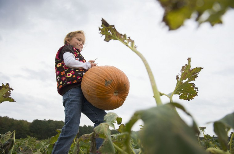 Autumn Watson carries a pumpkin through the patch at Councell Farms in Cordova, Md. (JIM WATSON / AFP/Getty Images)