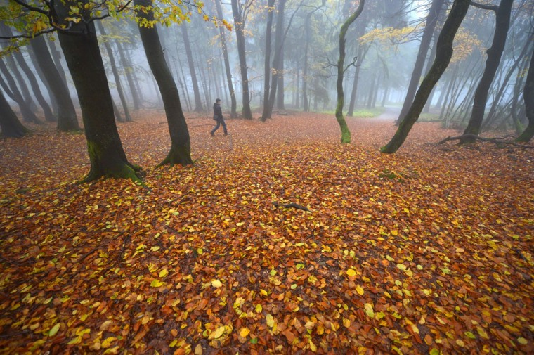 A man walks through fallen leaves in a foggy forest on the Feldberg mountain in the Taunus region of western Germany. (ARNE DEDERT / AFP/Getty Images)