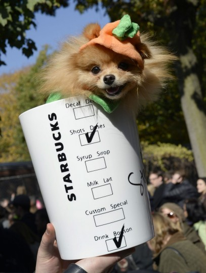 A dog in costume participates in the 23rd Annual Tompkins Square Halloween Dog Parade on October 26, 2013 in New York City. Thousands of spectators gather in Tompkins Square Park to watch hundreds of masquerading dogs in the countrys largest Halloween Dog Parade. (Timothy Clary/AFP/Getty Images)