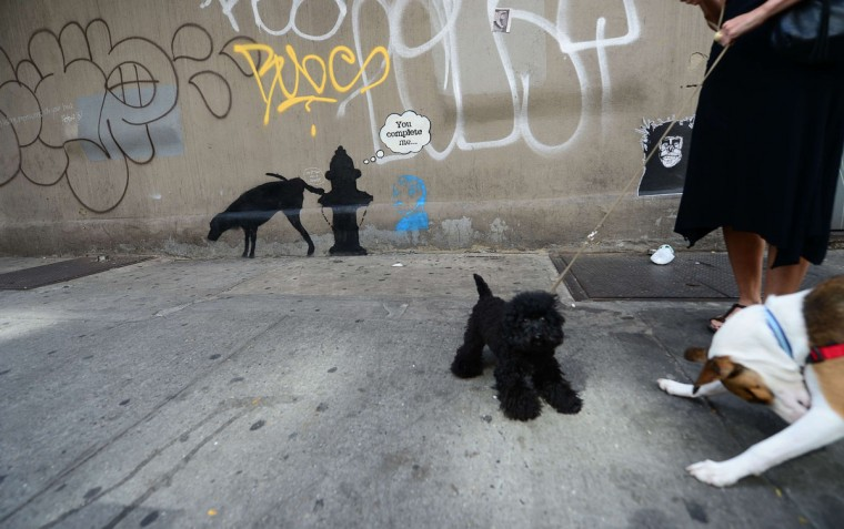 Two dogs play in front of street art graffiti by elusive British artist Banksy, as part of his month-long Better Out Than In exhibit in New York. (EMMANUEL DUNAND / AFP/Getty Images)