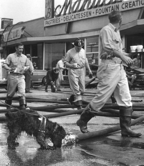 "This photograph entitled ""Thirsty"" shows a dog drinking from a hose with the remains of a fire in the background in February 1961. The picture took first place in a contest. (William L. Klender/Baltimore Sun)"