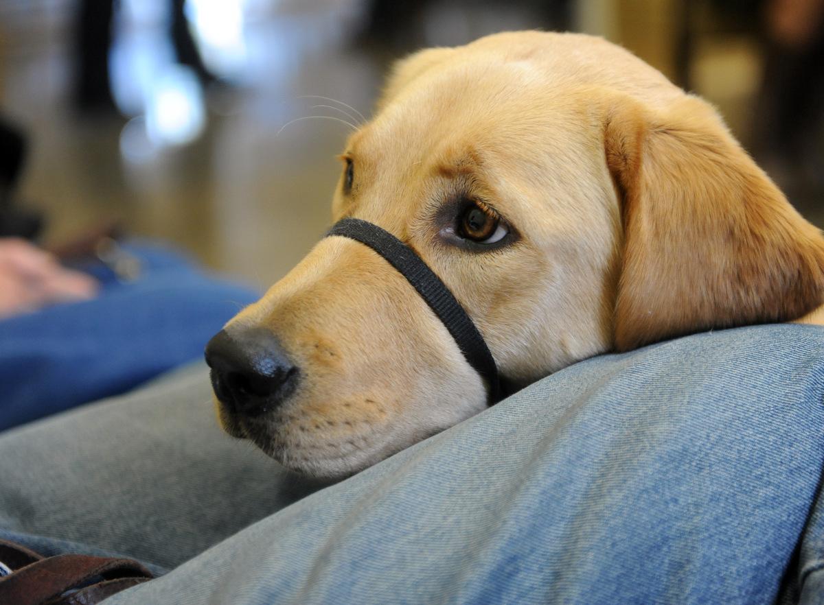 Service Dog Training Maryland