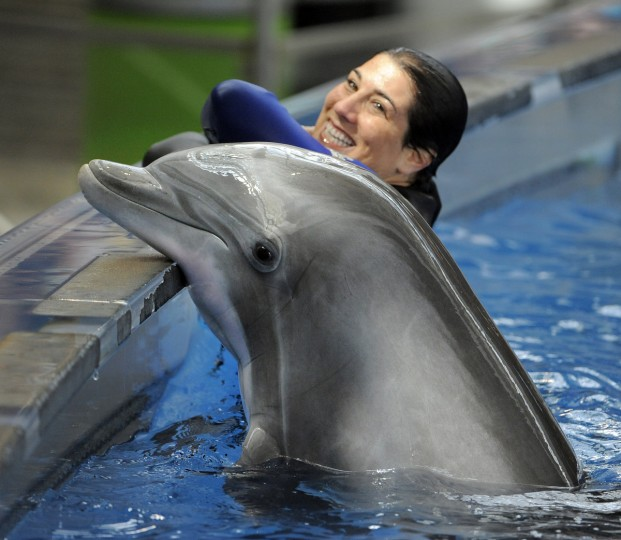 Allison Ginsburg the Manager of Marine Mammal Training gets in the water with one of the Atlantic Bottlenose dolphins. (Lloyd Fox/Baltimore Sun)