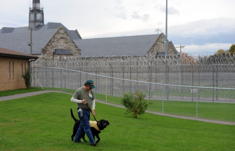 Kent Brewer, 61, walks Trooper outside Unit 2 at Maryland Correctional Institution-Hagerstown. Brewer is among several incarcerated veterans and other prisoners training service dogs for wounded service people. (Kim Hairston/Baltimore Sun)