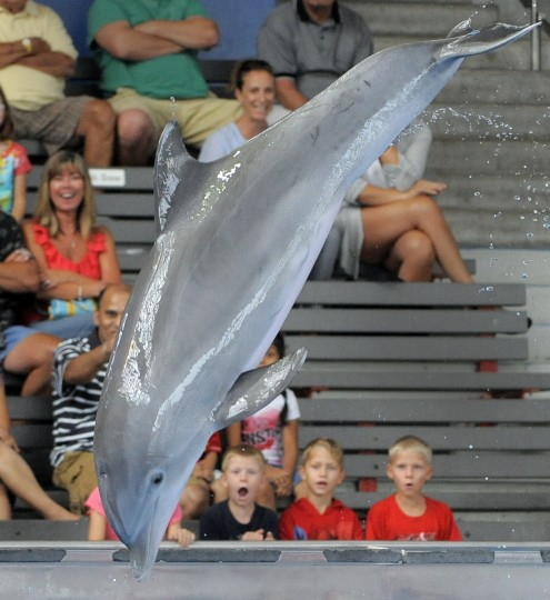 Dolphins can grow to 6-12 feet long. (Lloyd Fox/Baltimore Sun)