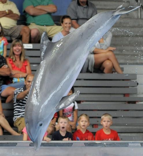 Dolphins can grow to 6-12 feet long. (Lloyd Fox/Baltimore Sun)