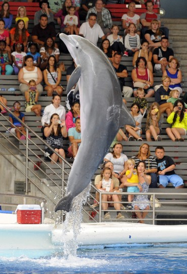 The dolphins at the aquarium range from 5 to 41 years-old. (Lloyd Fox/Baltimore Sun)