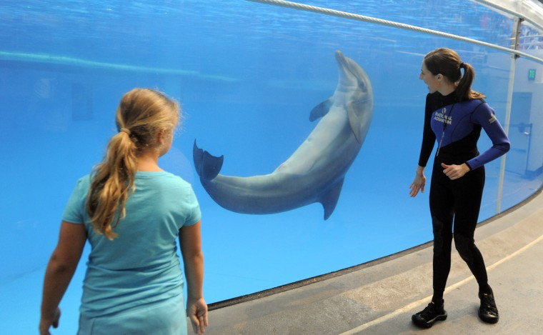 Dolphin trainer Kerry Martens, right, gets some help from Julia Brodowski, age 8, of Macumgie, PA down near the dolphin tank. (Lloyd Fox/Baltimore Sun)