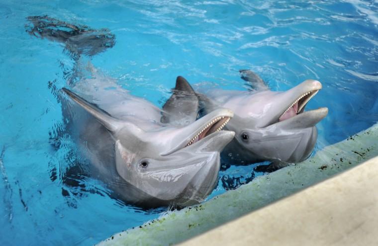 Chesapeake and Maya during a training session at the National Aquarium. (Lloyd Fox/Baltimore Sun)