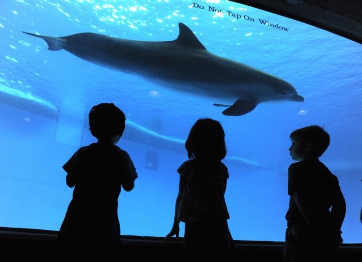 Children watch the dolphins swim at the National Aquarium in Baltimore. (Lloyd Fox/Baltimore Sun)
