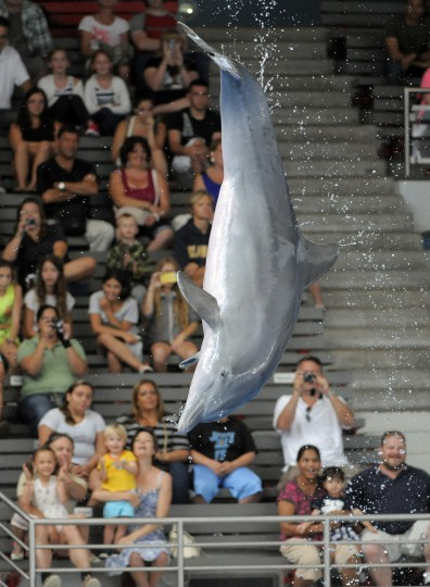 Visitors can watch the training sessions at the aquarium for free. (Lloyd Fox/Baltimore Sun)