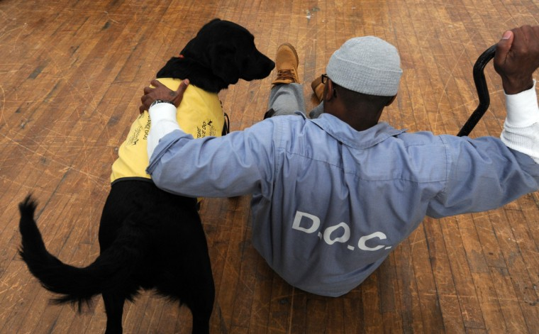 Dumplin', a future guide dog, and an inmate demonstrate how the dog suppoprt the weight of a person who has fallen so they can get up. Dumplin' also picked up the dropped cane. (Kim Hairston/Baltimore Sun)