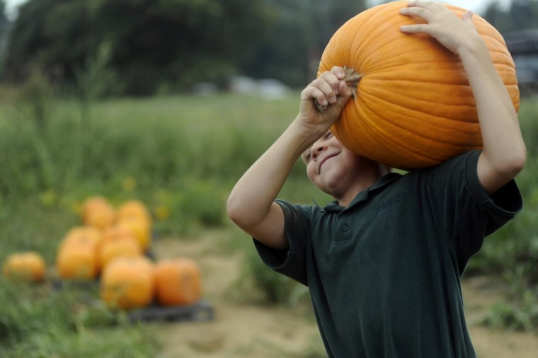 In September 2009 students at McDonough school pick pumpkins from their community vegetable garden. Here, fifth grader Riley Bakewell carries a pumpkin. (Barbara Haddock Taylor/Baltimore Sun)