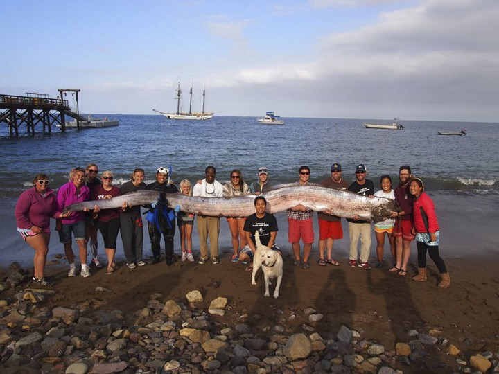 The crew of sailing school vessel Tole Mour and Catalina Island Marine Institute instructors hold an 18-foot-long oarfish that was found in the waters of Toyon Bay on Santa Catalina Island. (REUTERS/Catalina Island Marine Institute)