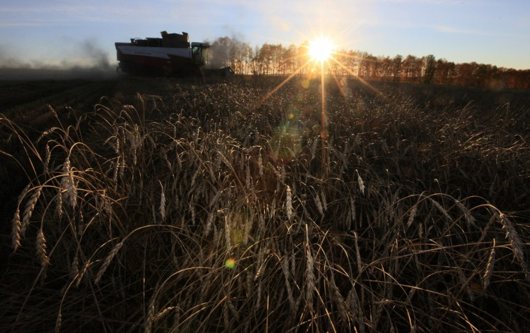 "A combine harvester works during sunset on a wheat field of the ""Svetlolobovskoye"" farm outside the village of Novosyolovo, some 240 km (149 miles) south of Russia's Siberian city of Krasnoyarsk. Rain will cut the area Russia sows for winter grains by one-fifth compared to the official forecast, the Agriculture ministry said on Monday, fueling speculation that 2014's winter wheat crop could fall and put pressure on global supply. (Ilya Naymushin/Reuters)"