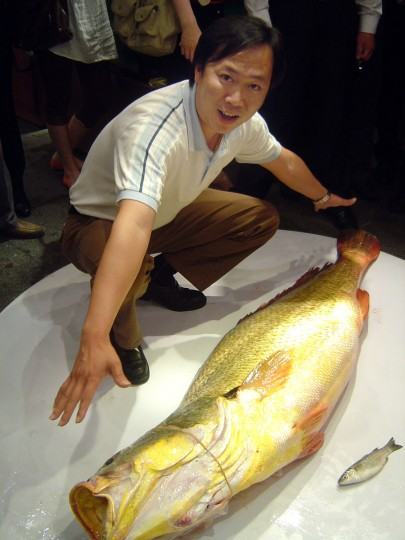 A restaurant owner named Pan shows off his prize fish, which he paid $75,000, in Zhanjiang, southern China's Guangdong province. (AFP/Getty Images)