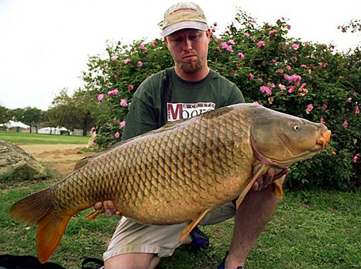 "Tommy Robinson of Baltimore, winner of the 2004 American Carp Society ""Big Fish Award"" holds a 45lb, 9oz. Common carp caught at Town Lake in Austin Texas. (Photo courtesy of the American Carp Society)"