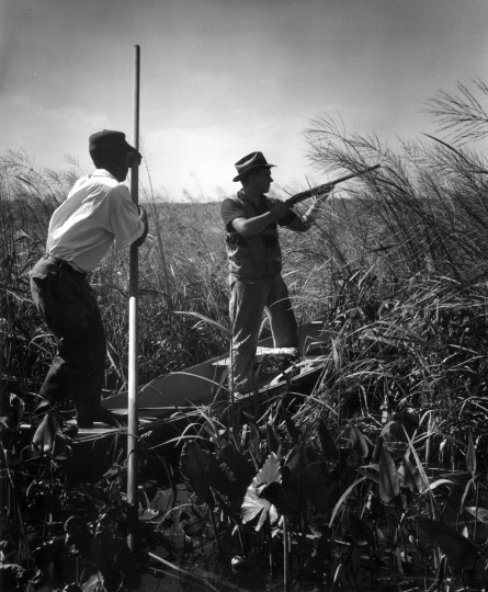 In an impressive balancing act, hunting guide Charles Bias pushes a marsh boat through the water as Set Fitchett keeps a lookout for railbirds during an Oct. 1954 hunting trip. (Hans Marx/Baltimore Sun)